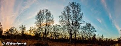 2015-03-15 - Panoramique Bois 02.jpg