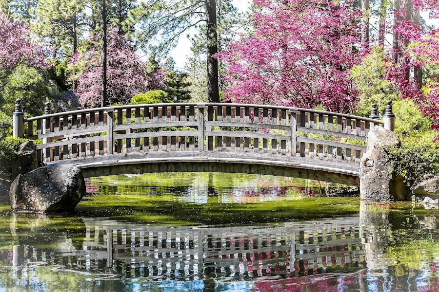 Manato Park In Spokane Washington by Leah N - City,  Street & Park  City Parks ( water, reflection, park, tree, bridge,  )