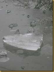 IMG_0757 Iceberg