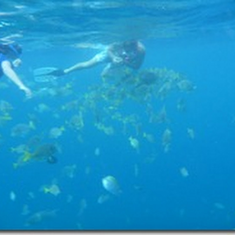 Snorkeling in Cabo San Lucas