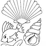 conchas-9.jpg