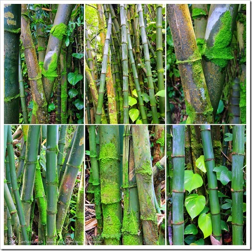 140728_HawaiiTropicalBotanicalGarden_bamboo