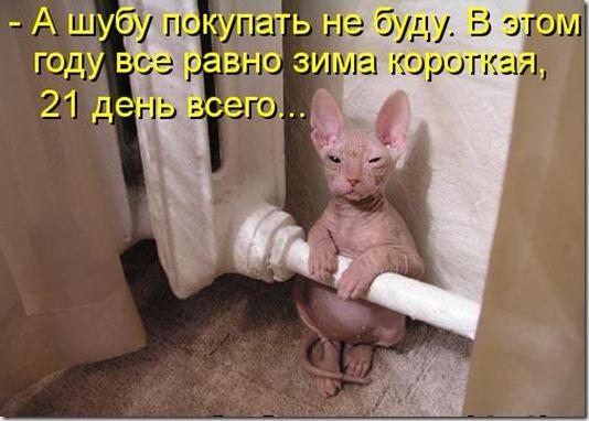 kotomatritsa_Xa