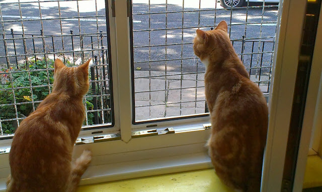 two ginger cats looking out of a window