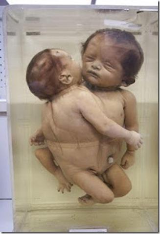 bayi diawet untuk kajian 1