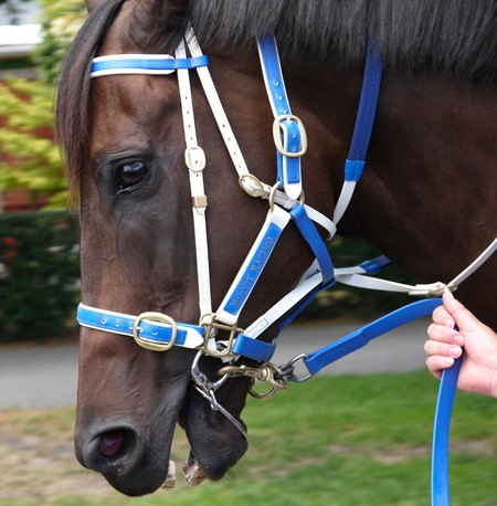 black caviar_headshotJPG