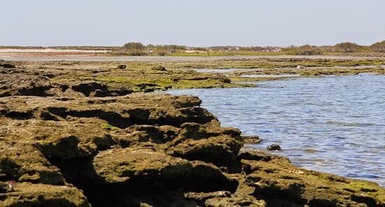 Laguna San Ignacio Shoreline