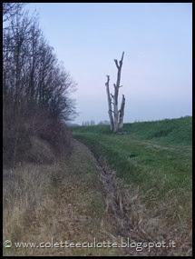 Passeggiata al Dosolo - 1 gennaio 2013 (67)