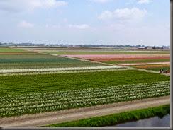 Leiden-14 145