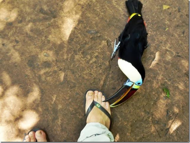 Parque_das_Aves_DSC09795