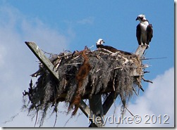 2012-01-24 Pine Island Florida 009