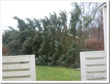 væltet træ 003