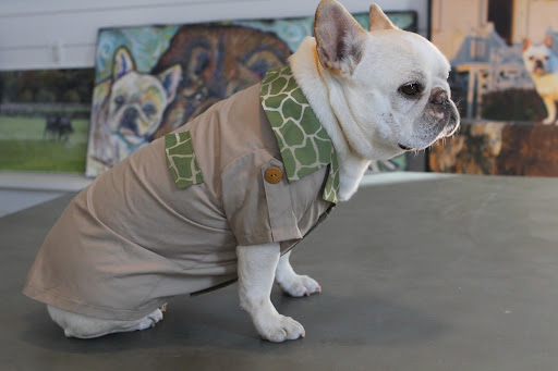 Dress your pet fashionista in this rugged design, which is sure to turn heads with its high-end look and comfy feel.  This khaki colored shirt with safari trim even has wooden buttons on the sleeves.