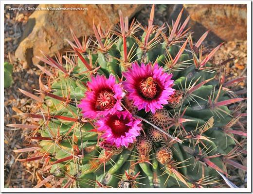 131203_TucsonBotanicalGarden_108