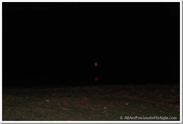 2012 good camera pics 241