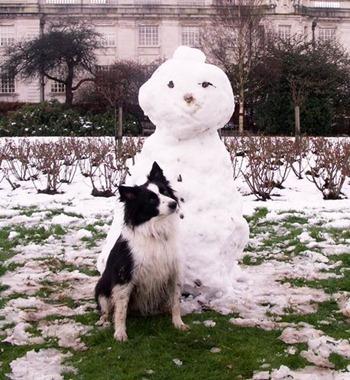 Пастушья собака и снеговик