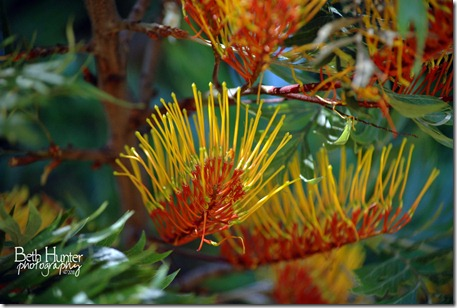 tree-flower-4