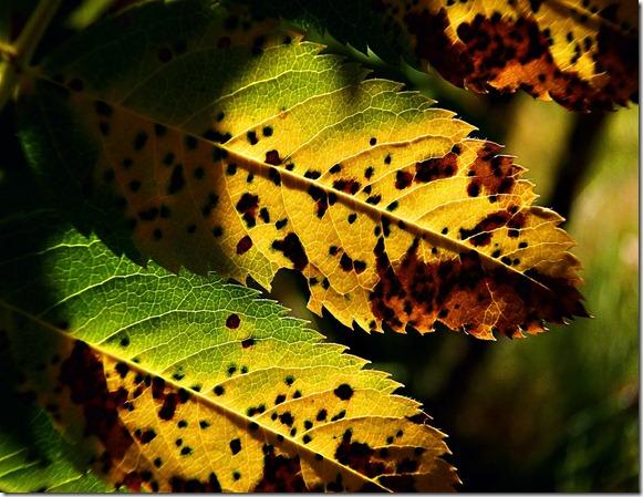fall-56933_1280