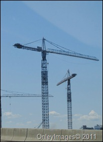 cranes0817 (1)