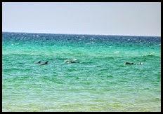 03 - Dolphin on Beach