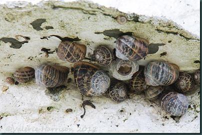 12-snails