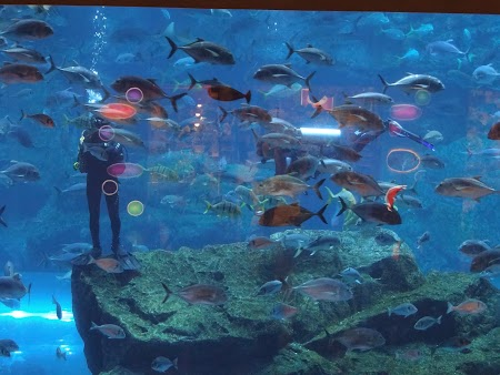 Obiective turistice Dubai: Scafandrii la acvariu