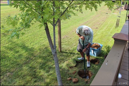 Al planting azaleas