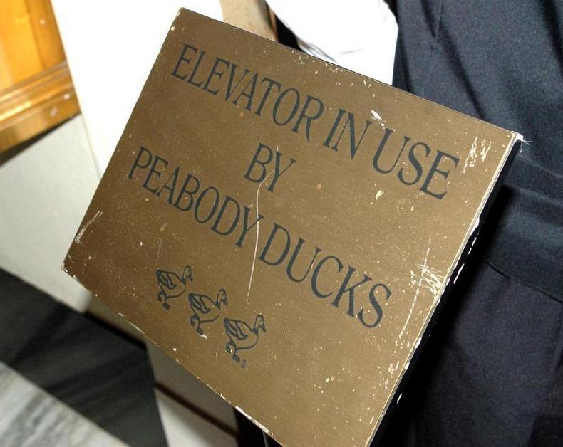 peabody-ducks-7
