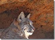 AZ Sanora Desert Museum 050