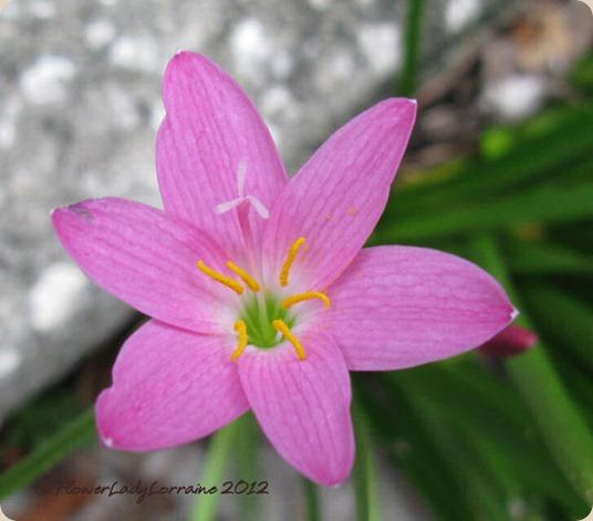 09-27-rain-flower