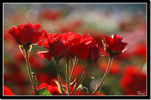flor día del amor (6)