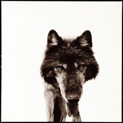 wolf-3_D