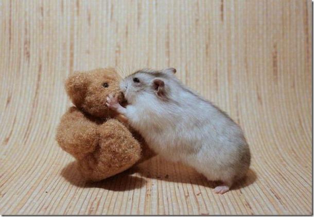 funny-animals-cute-19