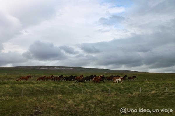 Hvammstangi-Islandia-4.jpg