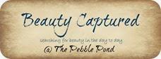 beautycaptured1final_zps2e99ad77