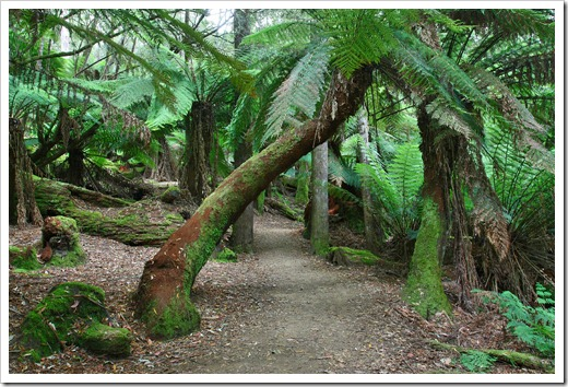 100103_Mt-Field-National-Park,-Tasmania_179