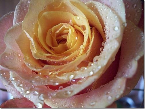 para san valentin rosas y flores (7)