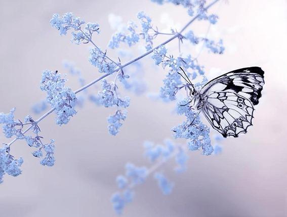 borboleta transparente nas flores