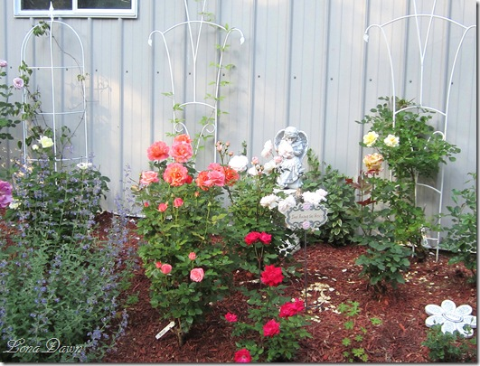 Rose_Garden2_May19