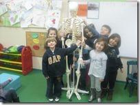ο σκελετός του σώματος (1)