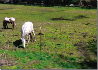Horses along the Weyerhaeuser Woods Railroad (WTCX) on May 17, 2005