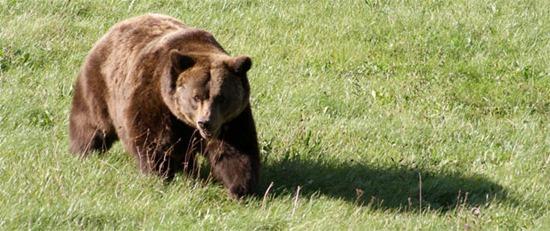 El proyecto Frutos para el oso