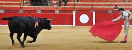 Miguel Cuartero 6º novillo (85)