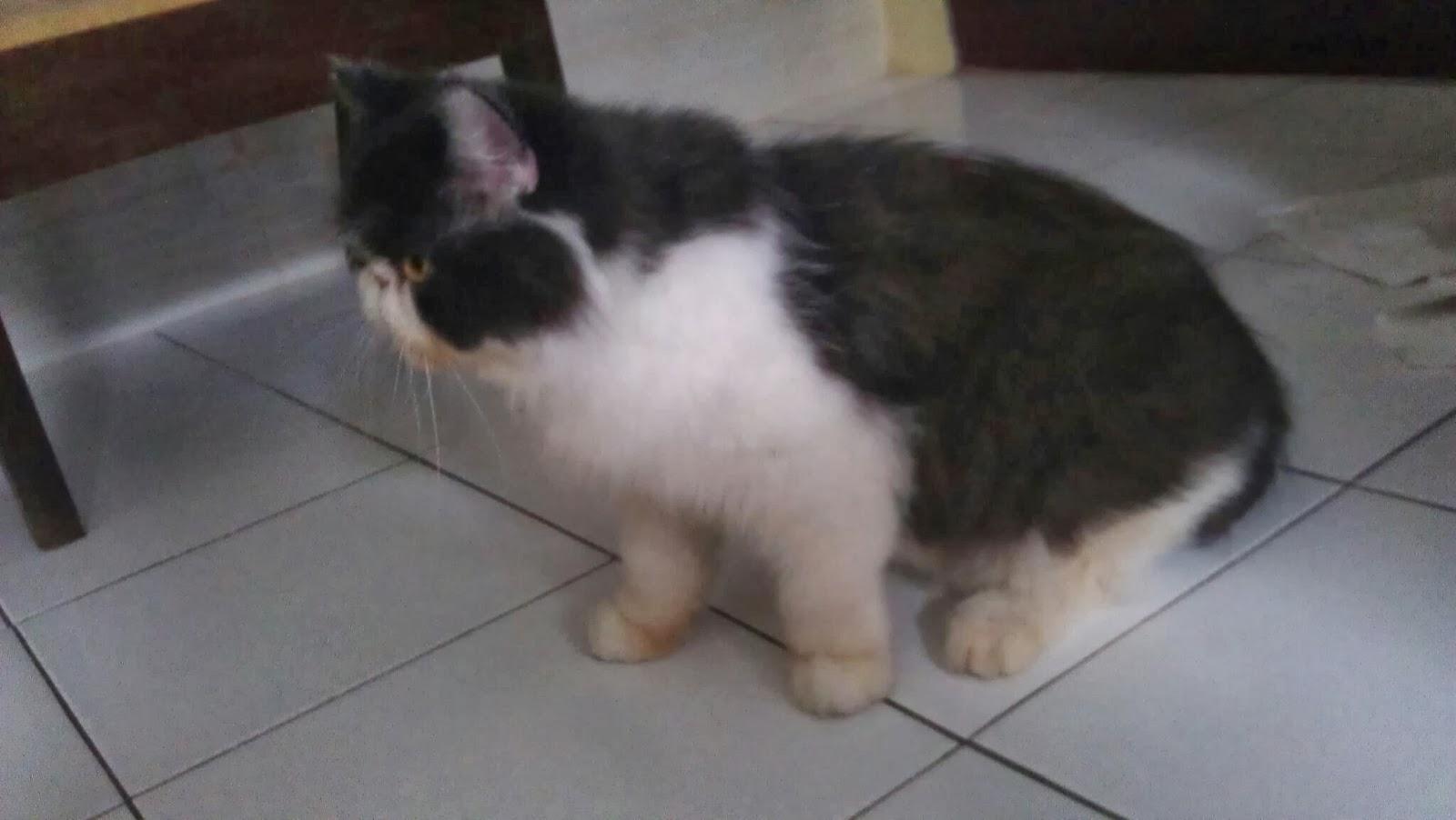 Penitipan Kucing Bandung Mojocathouse