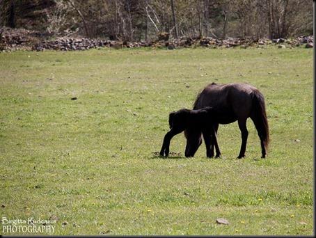 horses_20120506_fol