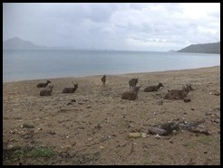 Indonesia, Komodo Island, 8 January 2013 (5)