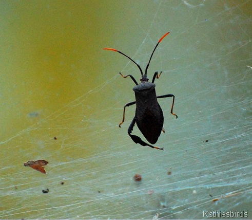4. bug in the window-kab