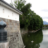 moat in shizuoka in Shizuoka, Sizuoka (Shizuoka) , Japan