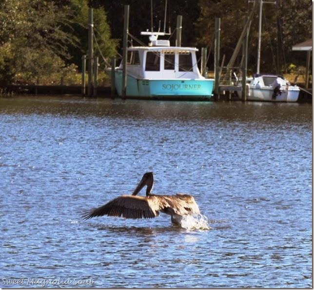 Pelican Wake
