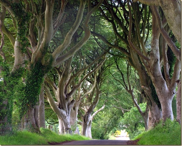 The-dark-hedges-002